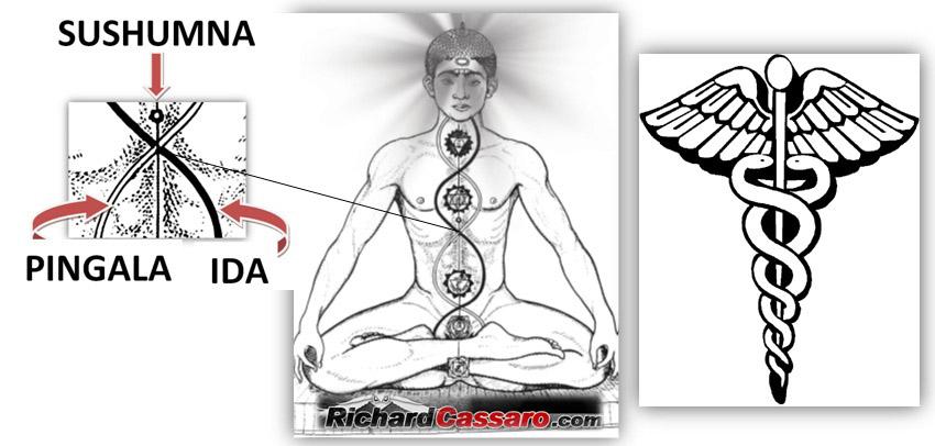 http://www.richardcassaro.com/wp-content/uploads/2011/09/Caduceus-Kundalini-Yoga.jpg